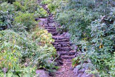An image of nature's stairway.