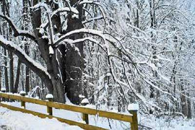 A photographic image of a snowy fence.