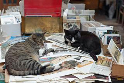 A photographic image of two cats in a pile of books.