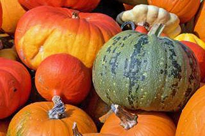 A photographic image of colorful pumpkins.